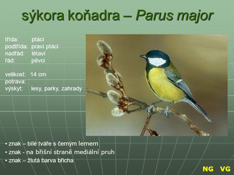 sýkora koňadra – Parus major znak – bílé tváře s černým lemem znak - na břišní straně mediální pruh znak – žlutá barva břicha třída: ptáci podtřída: p