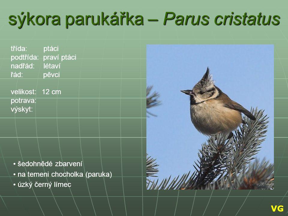 sýkora parukářka – Parus cristatus šedohnědé zbarvení na temeni chocholka (paruka) úzký černý límec třída: ptáci podtřída: praví ptáci nadřád: létaví