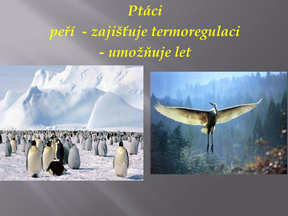 Ptáci peří - zajišťuje termoregulaci - umožňuje let