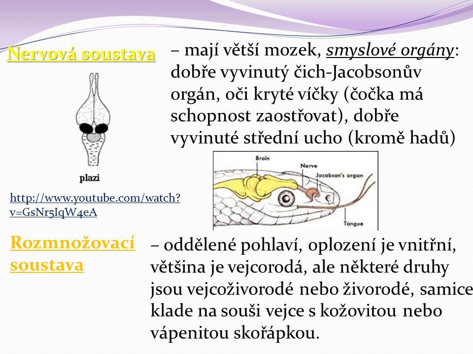 Nervová soustava – mají větší mozek, smyslové orgány: dobře vyvinutý čich-Jacobsonův orgán, oči kryté víčky (čočka má schopnost zaostřovat), dobře vyv