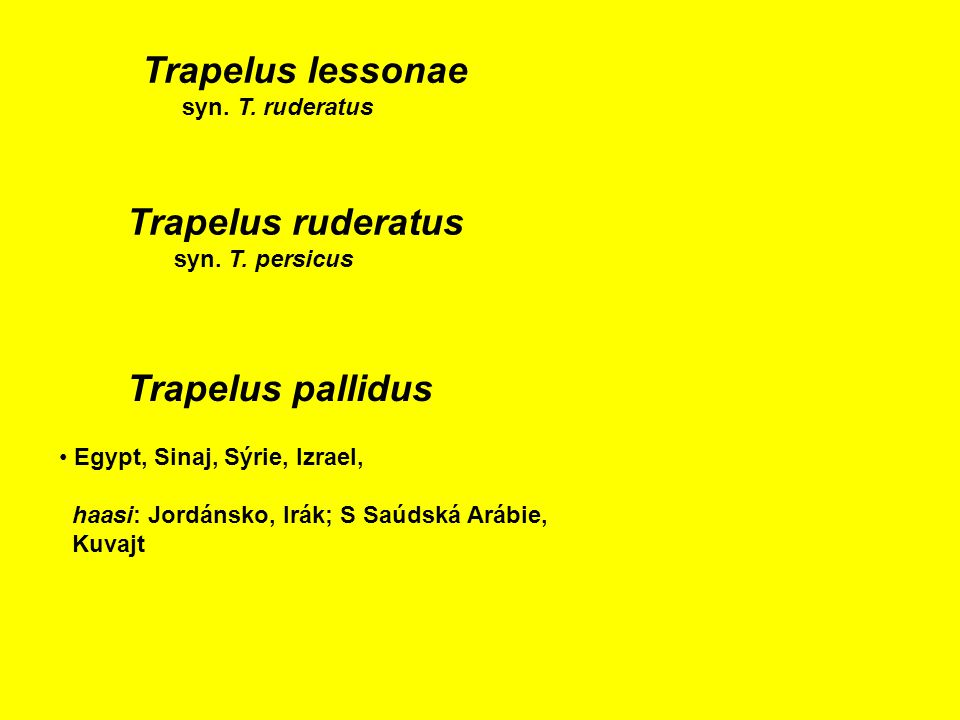 Trapelus ruderatus syn.T. persicus Trapelus lessonae syn.