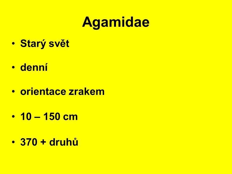 Agamidae Starý svět 10 – 150 cm denní 370 + druhů orientace zrakem