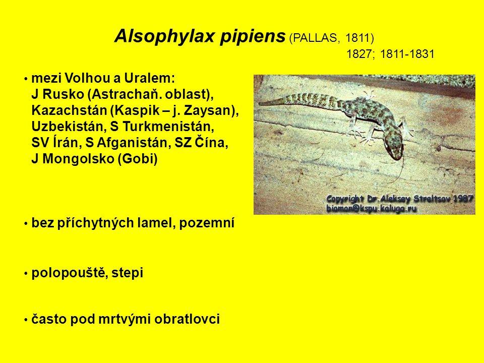 Alsophylax pipiens (PALLAS, 1811) 1827; 1811-1831 mezi Volhou a Uralem: J Rusko (Astrachaň.