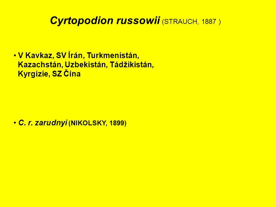 Cyrtopodion russowii (STRAUCH, 1887 ) V Kavkaz, SV Írán, Turkmenistán, Kazachstán, Uzbekistán, Tádžikistán, Kyrgizie, SZ Čína C.