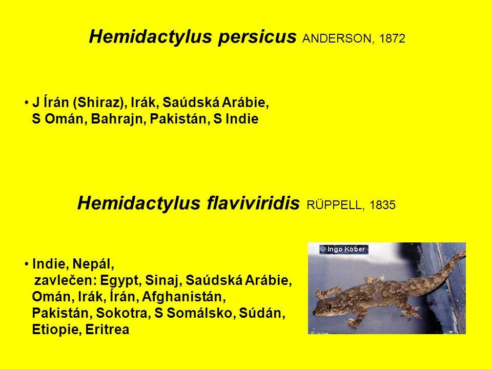 Hemidactylus persicus ANDERSON, 1872 J Írán (Shiraz), Irák, Saúdská Arábie, S Omán, Bahrajn, Pakistán, S Indie Indie, Nepál, zavlečen: Egypt, Sinaj, Saúdská Arábie, Omán, Irák, Írán, Afghanistán, Pakistán, Sokotra, S Somálsko, Súdán, Etiopie, Eritrea Hemidactylus flaviviridis RÜPPELL, 1835