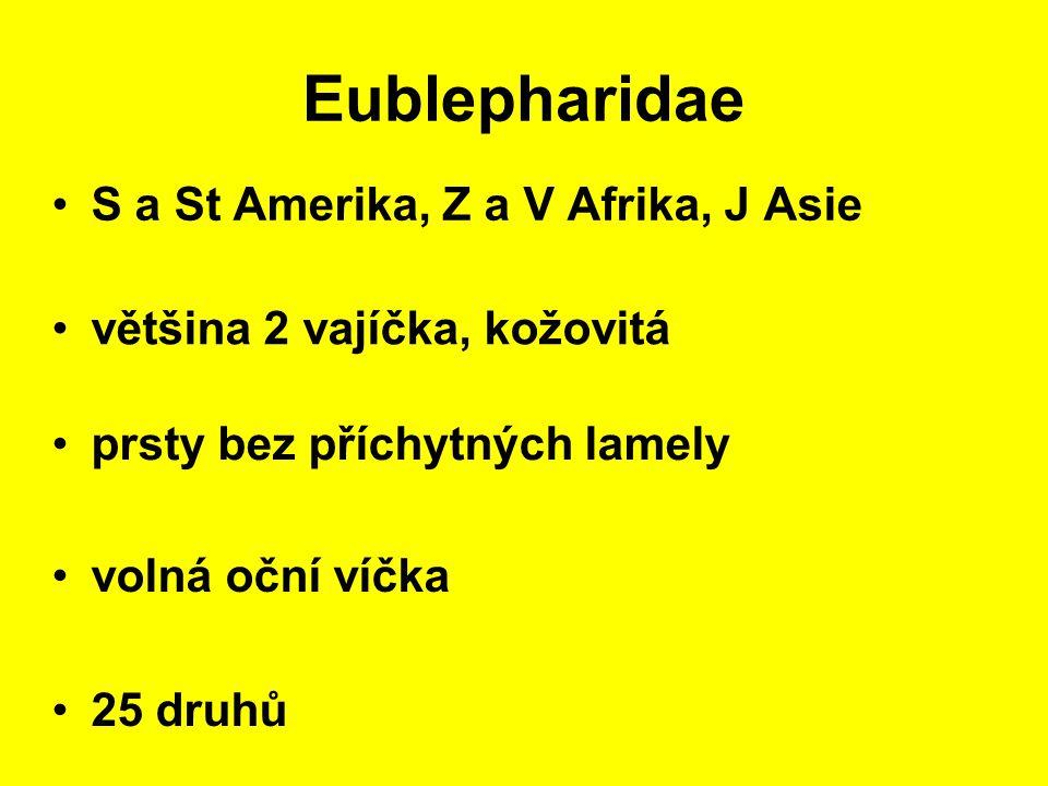 Eublepharidae S a St Amerika, Z a V Afrika, J Asie prsty bez příchytných lamely 25 druhů většina 2 vajíčka, kožovitá volná oční víčka