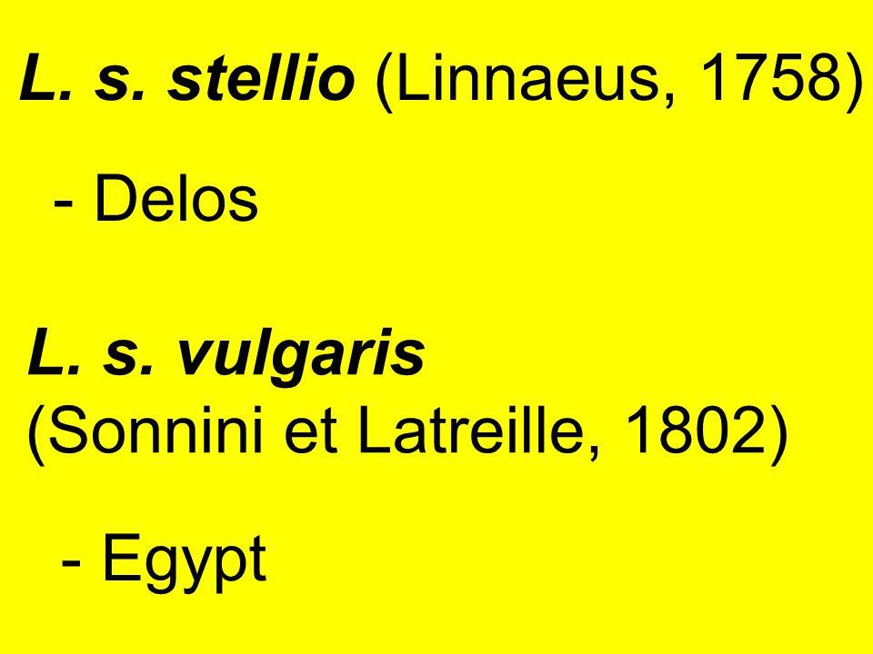 - Delos L. s. vulgaris (Sonnini et Latreille, 1802) - Egypt L. s. stellio (Linnaeus, 1758)