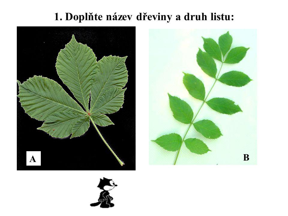 1. Doplňte název dřeviny a druh listu: A B