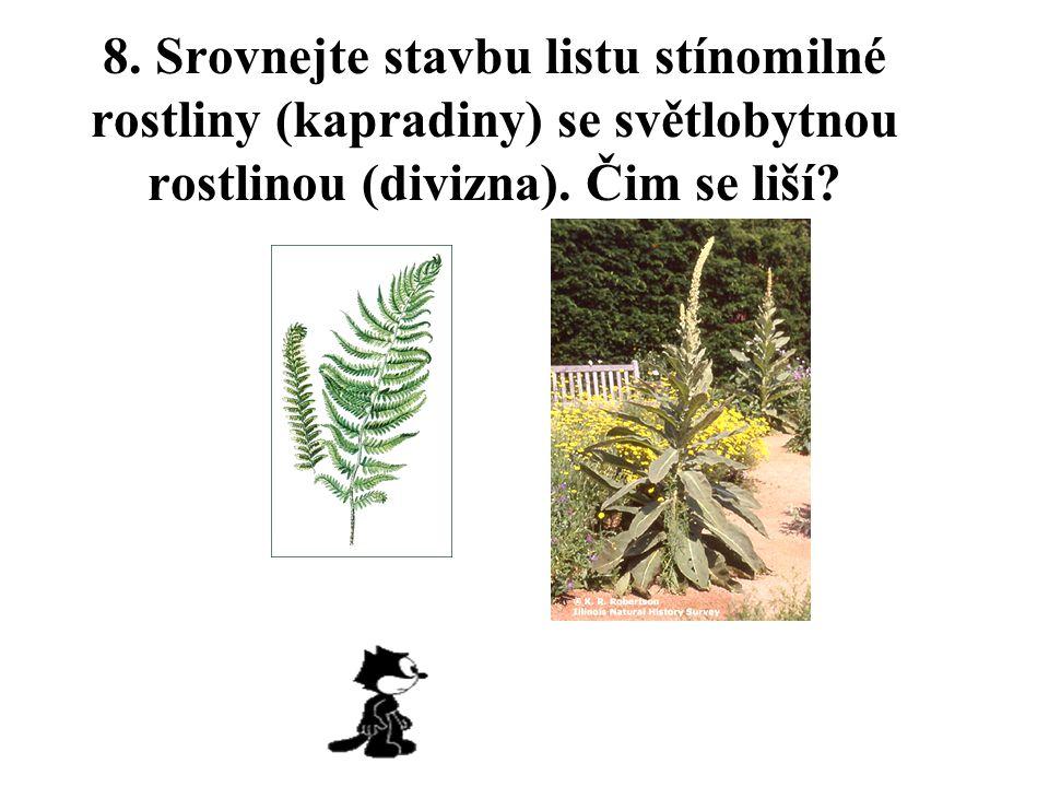 8. Srovnejte stavbu listu stínomilné rostliny (kapradiny) se světlobytnou rostlinou (divizna).
