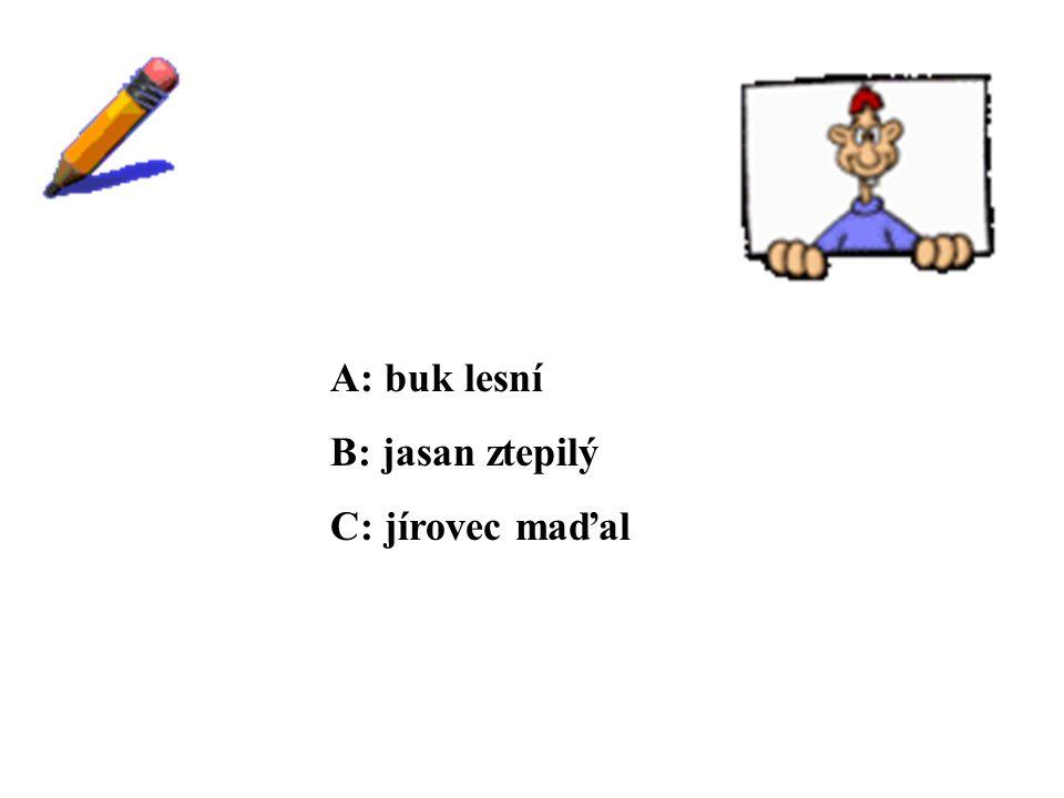 ŘEŠENÍ A: buk lesní B: jasan ztepilý C: jírovec maďal
