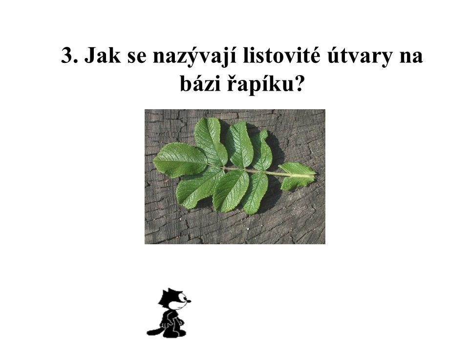 3. Jak se nazývají listovité útvary na bázi řapíku?
