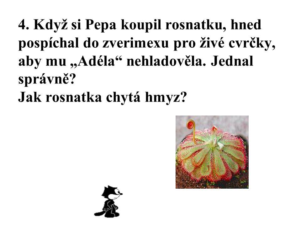 """4. Když si Pepa koupil rosnatku, hned pospíchal do zverimexu pro živé cvrčky, aby mu """"Adéla"""" nehladověla. Jednal správně? Jak rosnatka chytá hmyz?"""