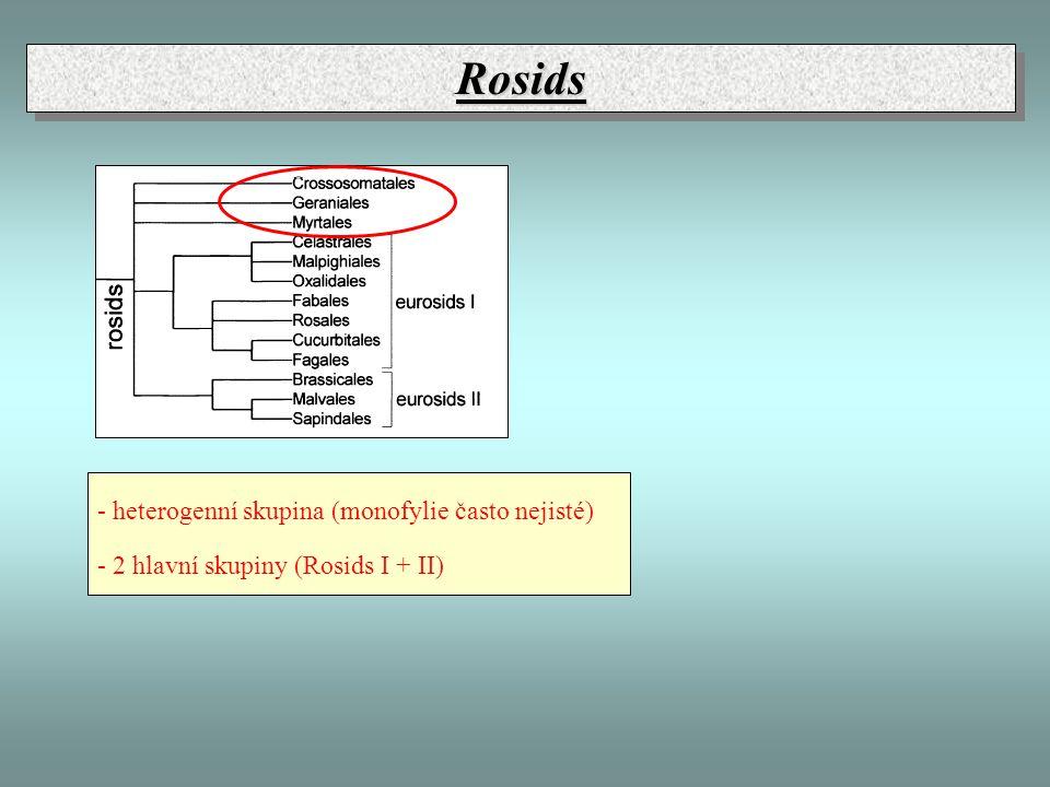 RosidsRosids - heterogenní skupina (monofylie často nejisté) - 2 hlavní skupiny (Rosids I + II)