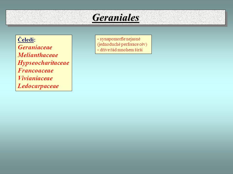 GeranialesGeraniales Čeledi: Geraniaceae Melianthaceae Hypseocharitaceae Francoaceae Vivianiaceae Ledocarpaceae - synapomorfie nejasné (jednoduché perforace cév) - dříve řád mnohem širší