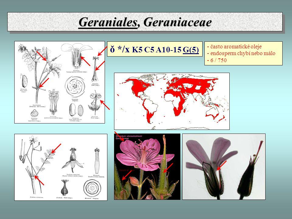 Geraniales, Geraniaceae - často aromatické oleje - endosperm chybí nebo málo - 6 / 750 ǒ */x K5 C5 A10-15 G(5)