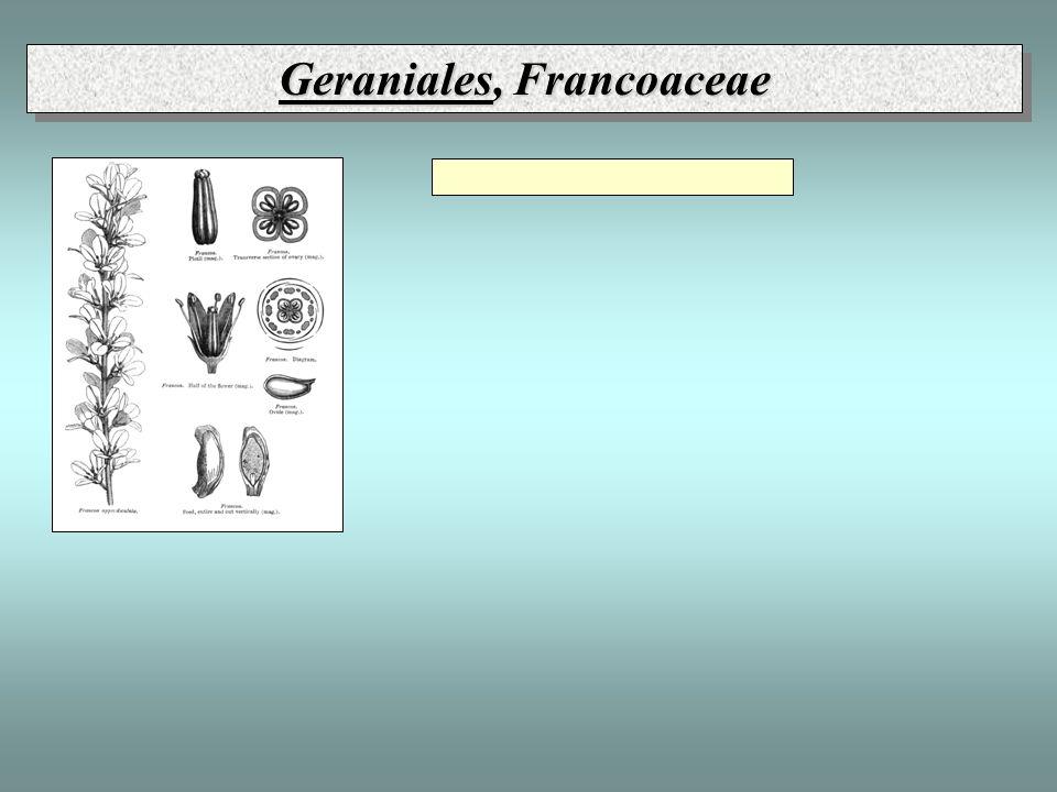 Geraniales, Francoaceae