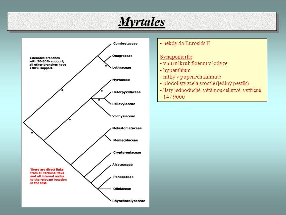 MyrtalesMyrtales - někdy do Eurosids II Synapomorfie: - vnitřní kruh floému v lodyze - hypanthium - nitky v pupenech zahnuté - plodolisty zcela srostlé (jediný pestík) - listy jednoduché, většinou celistvé, vstřícné - 14 / 9000