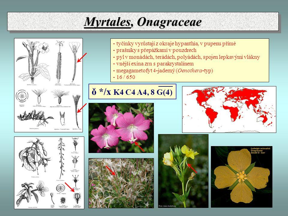 Myrtales, Onagraceae - tyčinky vyrůstají z okraje hypanthia, v pupenu přímé - prašníky s přepážkami v pouzdrech - pyl v monádách, terádách, polyádách, spojen lepkavými vlákny - vnější exina zrn s parakrystalínem - megagametofyt 4-jaderný (Oenothera-typ) - 16 / 650 ǒ */x K4 C4 A4, 8 G(4)