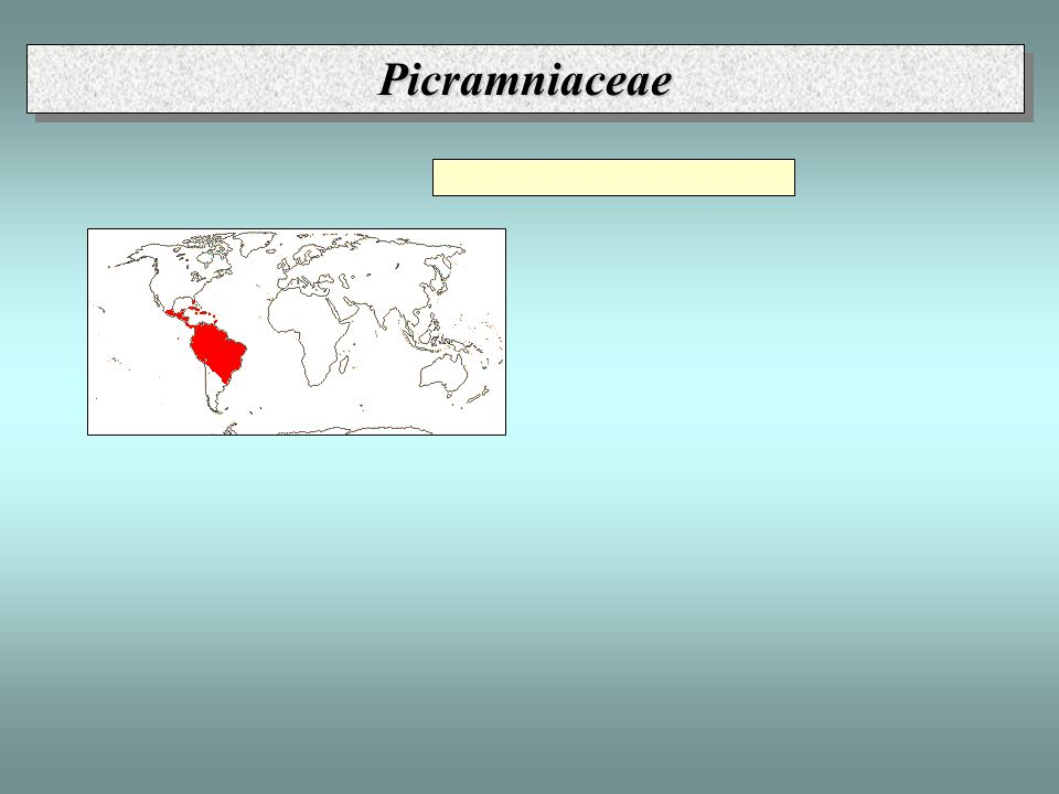 PicramniaceaePicramniaceae