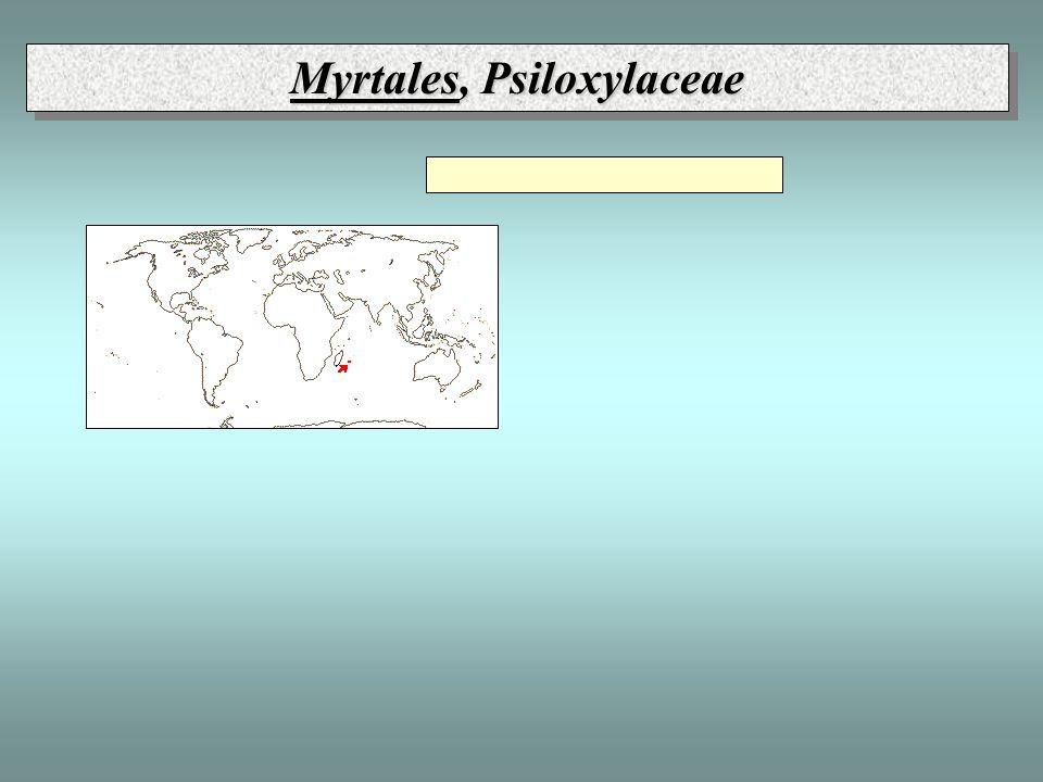 Myrtales, Psiloxylaceae