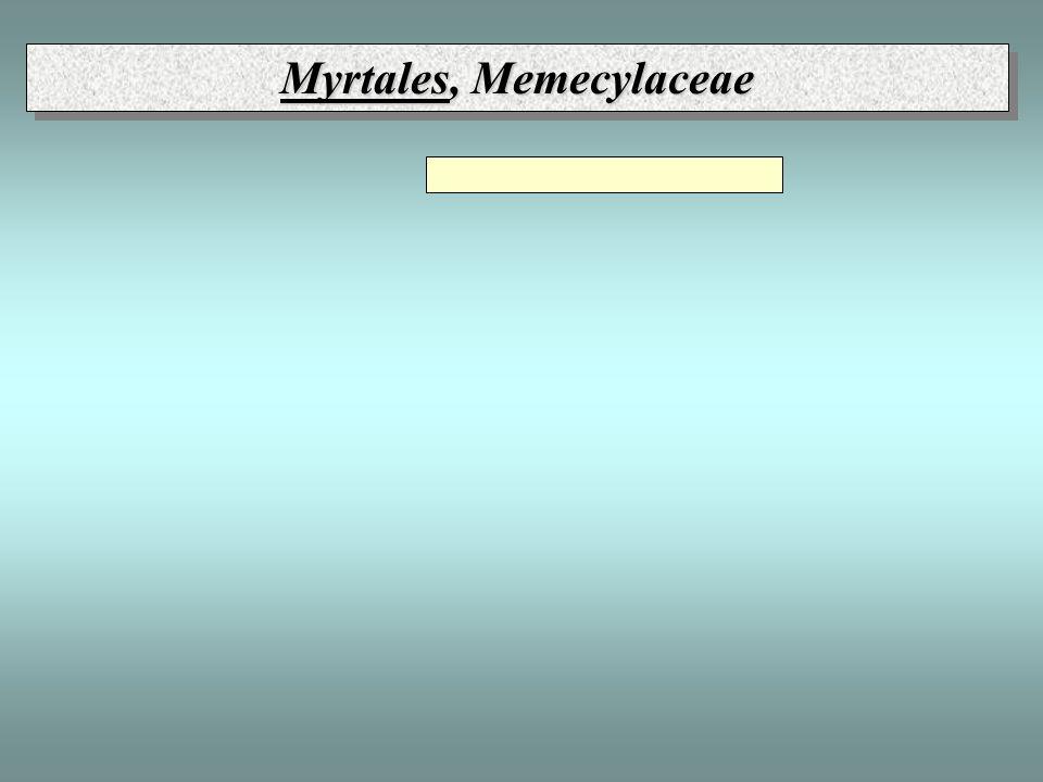 Myrtales, Memecylaceae