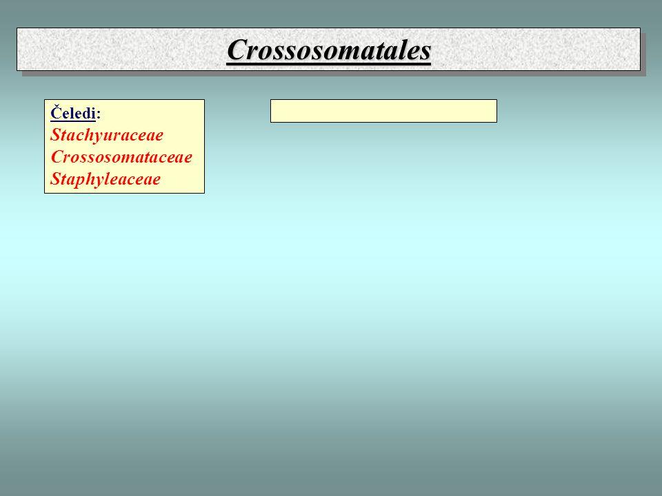 CrossosomatalesCrossosomatales Čeledi: Stachyuraceae Crossosomataceae Staphyleaceae