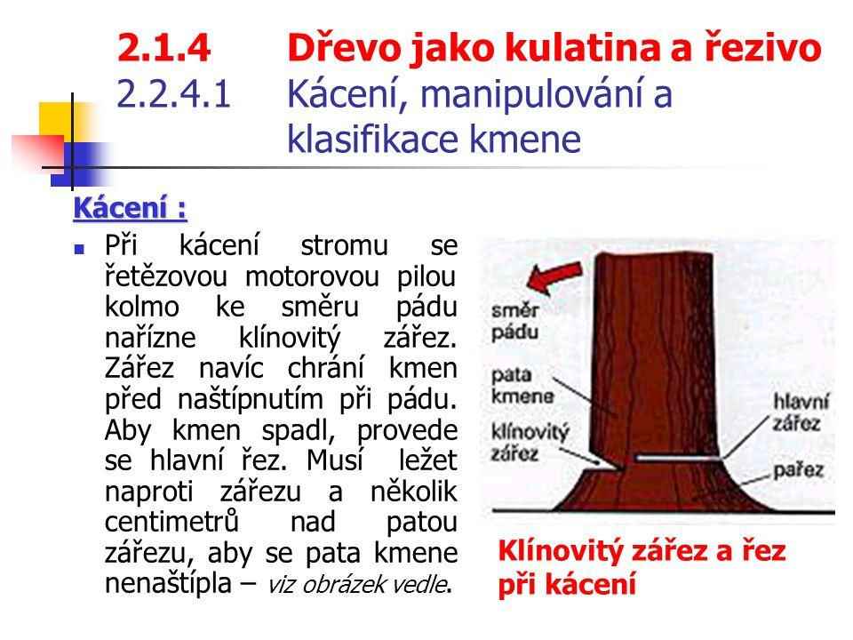 2.1.4Dřevo jako kulatina a řezivo 2.2.4.1Kácení, manipulování a klasifikace kmene Kácení : Při kácení stromu se řetězovou motorovou pilou kolmo ke směru pádu nařízne klínovitý zářez.