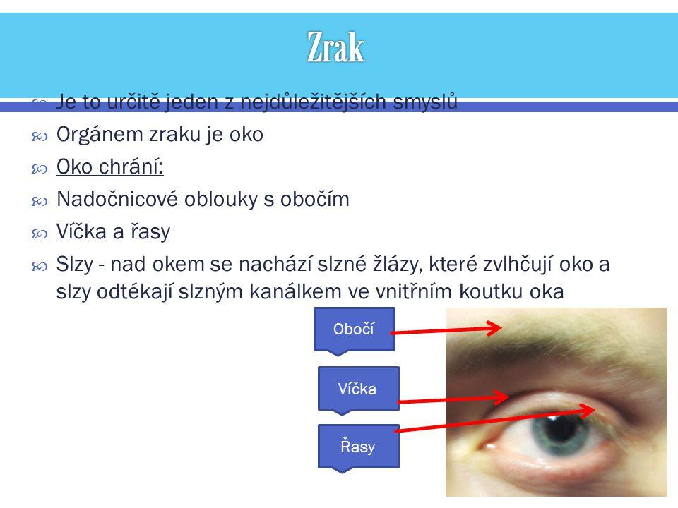  Je to určitě jeden z nejdůležitějších smyslů  Orgánem zraku je oko  Oko chrání:  Nadočnicové oblouky s obočím  Víčka a řasy  Slzy - nad okem se