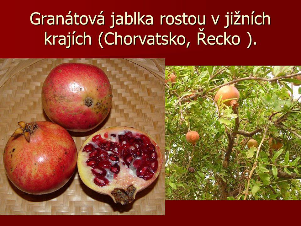 Granátová jablka rostou v jižních krajích (Chorvatsko, Řecko ).