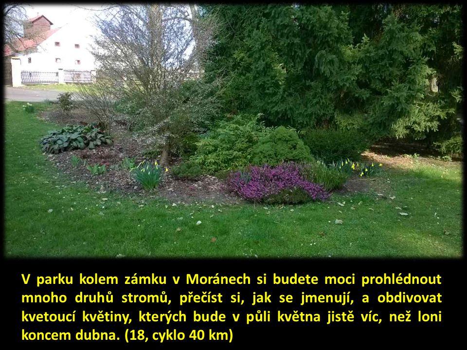 V parku kolem zámku v Moránech si budete moci prohlédnout mnoho druhů stromů, přečíst si, jak se jmenují, a obdivovat kvetoucí květiny, kterých bude v