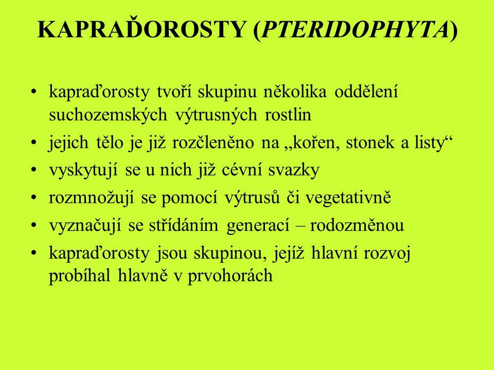 gametofyt - drobný, mykorrhitický, dlouhověký, většinou samostatný (plavuně) sporofyt – zelený, vytrvalý, nesoucí klasy se sporangii