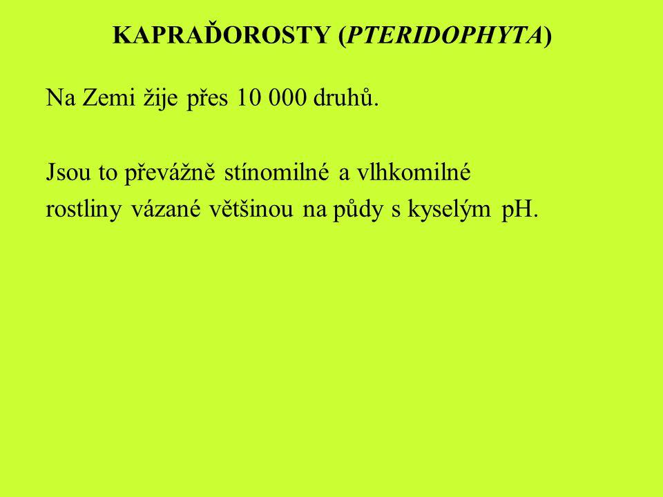 Mezi kapraďosrosty patří tato oddělení: plavuně (Lycopodiophyta) přesličky (Equisetophyta) kapradiny (Polypodiophyta)