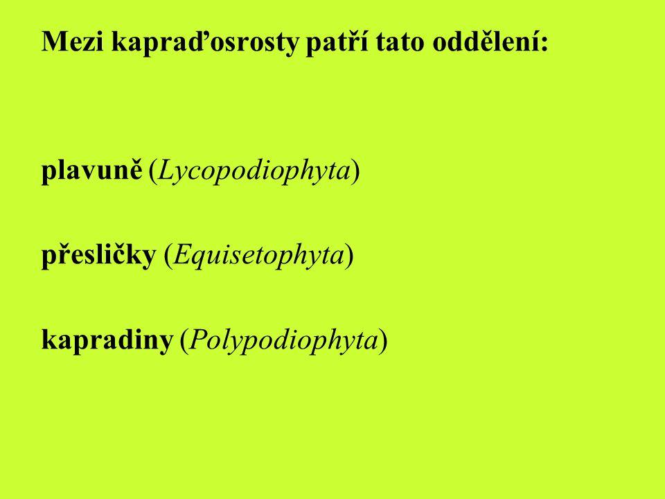 plavuně Lycopodiophyta