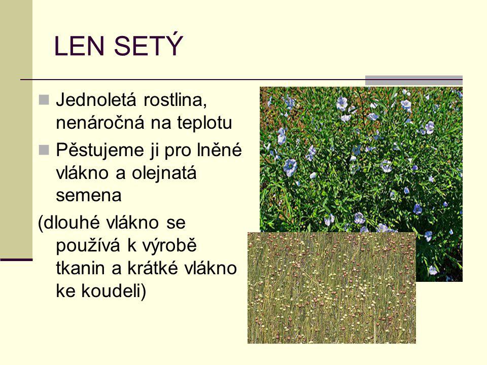 LEN SETÝ Jednoletá rostlina, nenáročná na teplotu Pěstujeme ji pro lněné vlákno a olejnatá semena (dlouhé vlákno se používá k výrobě tkanin a krátké v