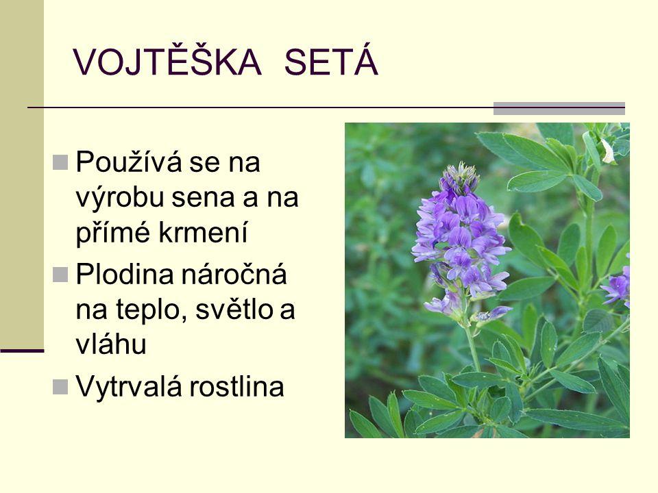 VOJTĚŠKA SETÁ Používá se na výrobu sena a na přímé krmení Plodina náročná na teplo, světlo a vláhu Vytrvalá rostlina