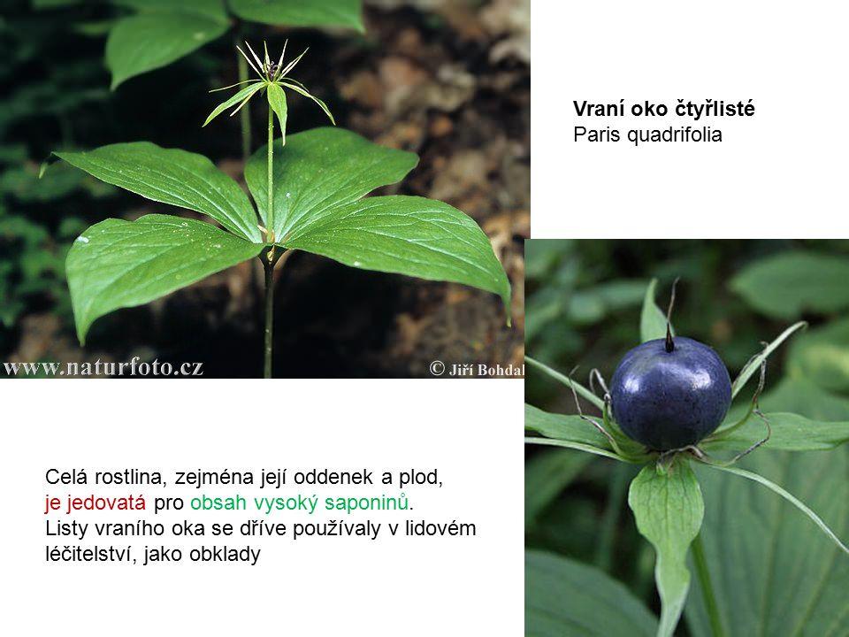 Celá rostlina, zejména její oddenek a plod, je jedovatá pro obsah vysoký saponinů.