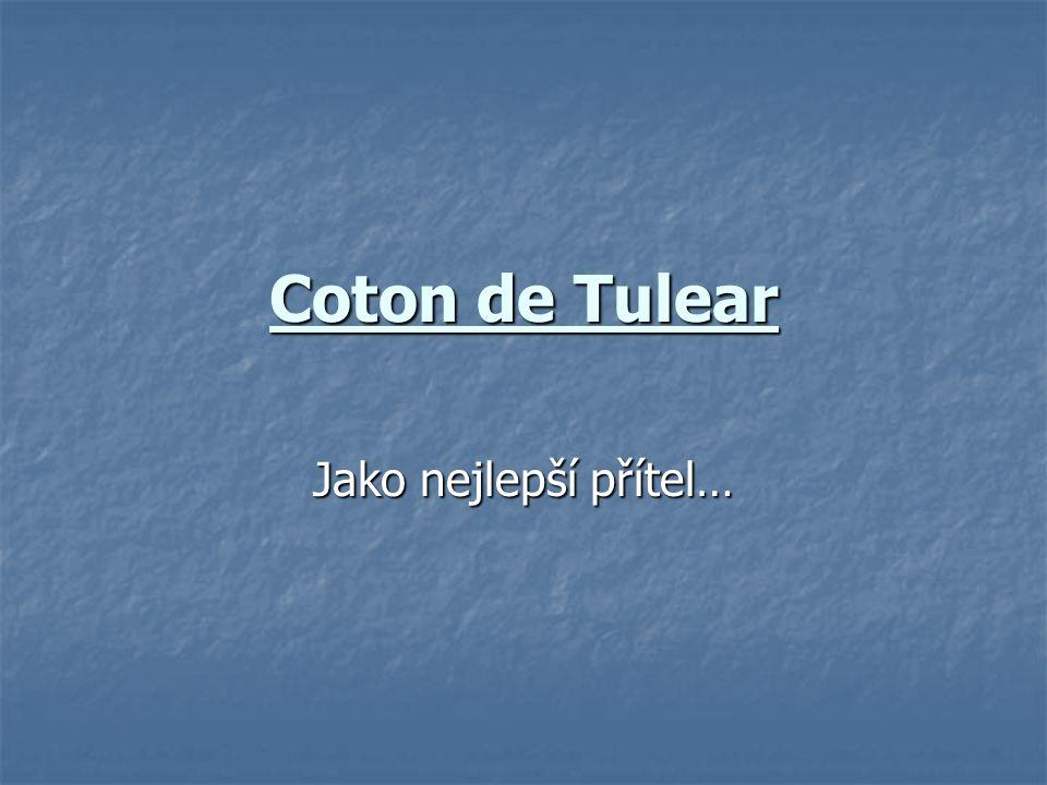 Coton de Tulear Jako nejlepší přítel…