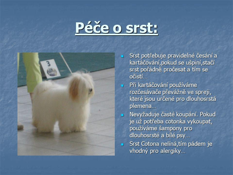 Výchova: Výchova psa Coton de Tuléar se obejde bez křiku a tvrdosti.
