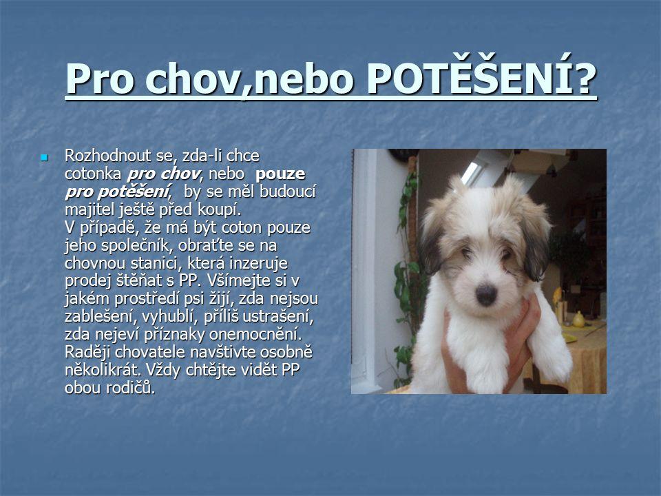 Štěňata Za štěně se pes považuje až do 1.roku života,pak se z něj stává dospělý pes… Za štěně se pes považuje až do 1.roku života,pak se z něj stává dospělý pes… Štěňata je nutné vydatně krmit,protože se (jako člověk) vyvíjí… Štěňata je nutné vydatně krmit,protože se (jako člověk) vyvíjí… Důležité je je krmit masem,i zeleninou (polévky) a stravu doplnit i granulemi určenými pro štěnata (např.:Pedigree…) Důležité je je krmit masem,i zeleninou (polévky) a stravu doplnit i granulemi určenými pro štěnata (např.:Pedigree…) Štěně je (jako každé jiné) velmi hravé a naštěstí to u něj přetrvá až do konce života,což u některých psů není a to je další Cotonkova výhoda… Štěně je (jako každé jiné) velmi hravé a naštěstí to u něj přetrvá až do konce života,což u některých psů není a to je další Cotonkova výhoda…