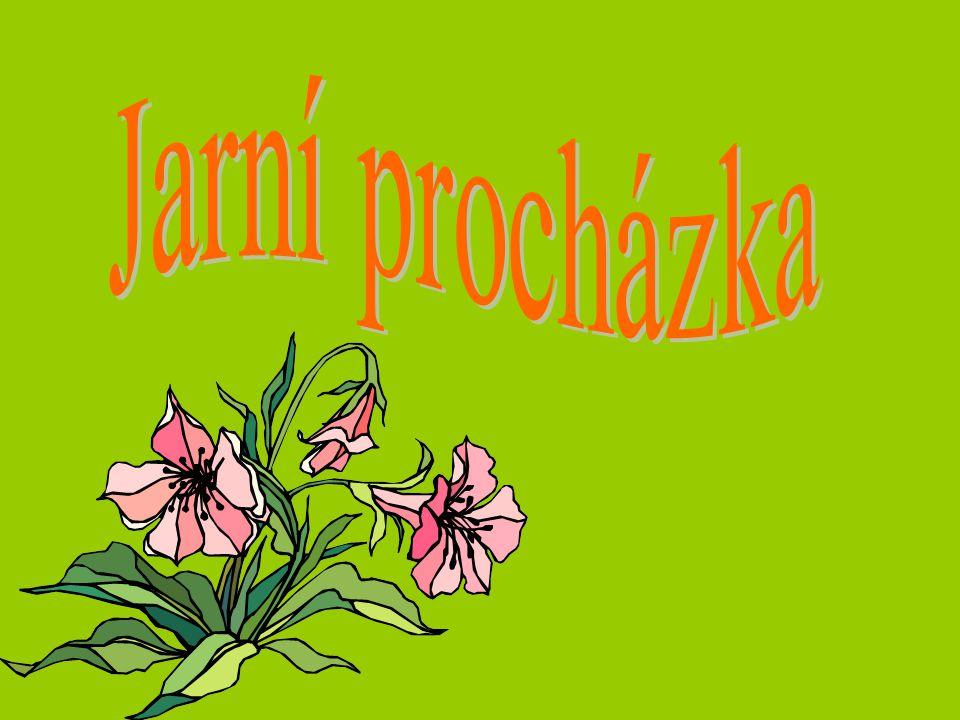 8.března slaví svátek ženy. Které ženě rozkvete tulipán ve váze.