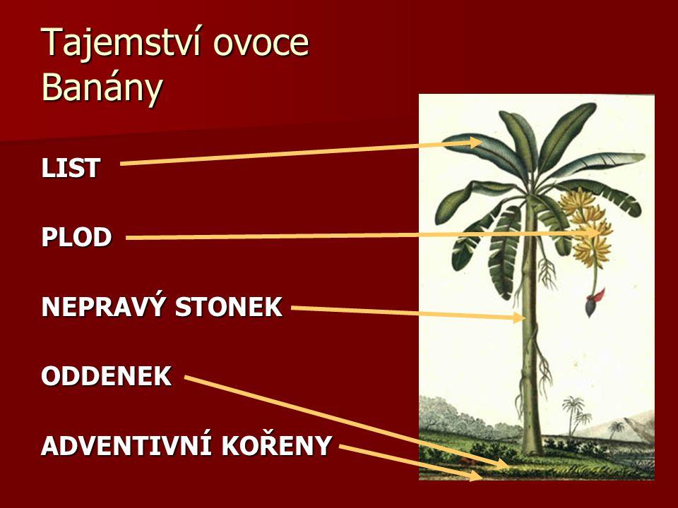 Tajemství ovoce Banány LISTPLOD NEPRAVÝ STONEK ODDENEK ADVENTIVNÍ KOŘENY