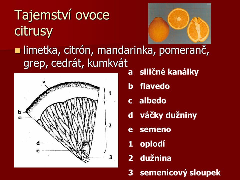 limetka, citrón, mandarinka, pomeranč, grep, cedrát, kumkvát limetka, citrón, mandarinka, pomeranč, grep, cedrát, kumkvát Tajemství ovoce citrusy a si
