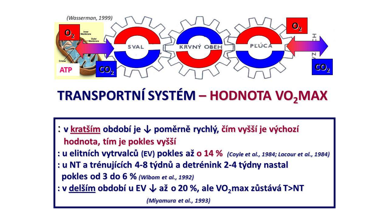 (Wasserman, 1999) ATP O2O2O2O2 O2O2O2O2 CO 2 TRANSPORTNÍ SYSTÉM – HODNOTA VO 2 MAX : v kratším období je ↓ poměrně rychlý, čím vyšší je výchozí hodnot