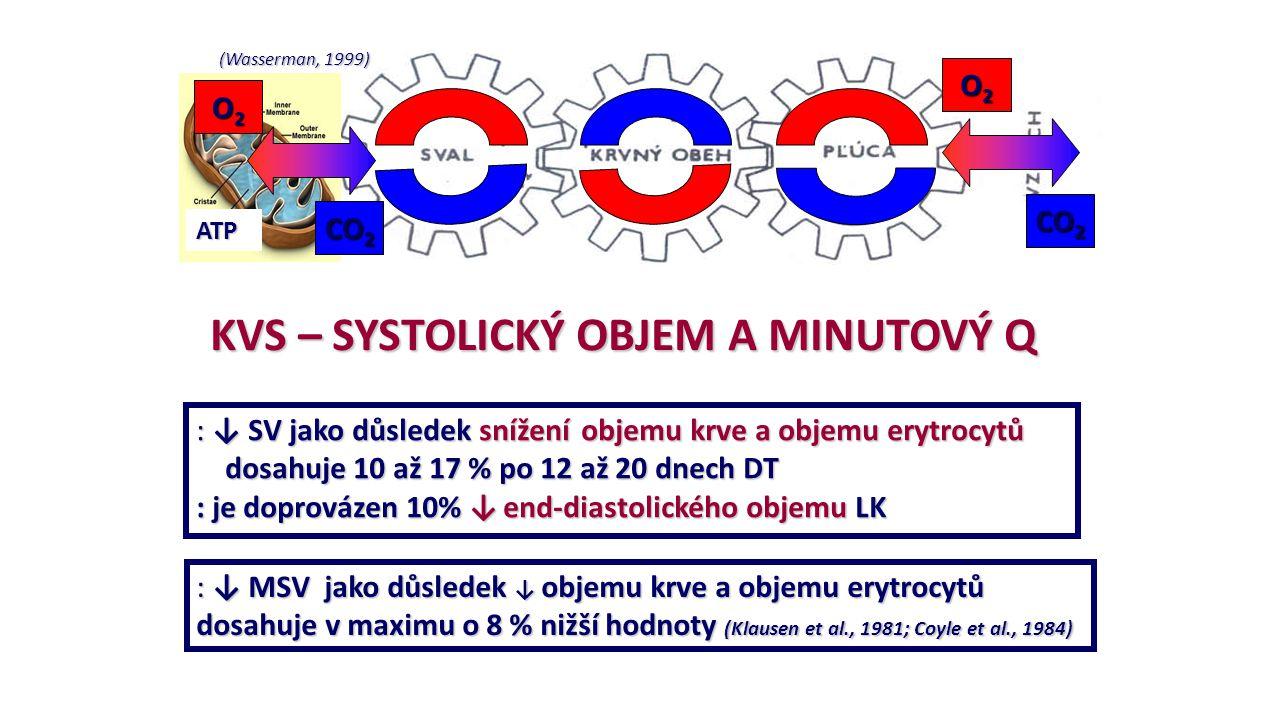 (Wasserman, 1999) ATP O2O2O2O2 O2O2O2O2 CO 2 KVS – SYSTOLICKÝ OBJEM A MINUTOVÝ Q : ↓ SV jako důsledek snížení objemu krve a objemu erytrocytů dosahuje