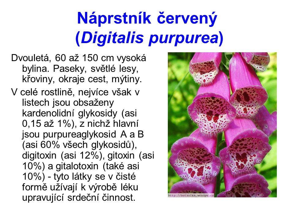 Náprstník červený (Digitalis purpurea) Dvouletá, 60 až 150 cm vysoká bylina.