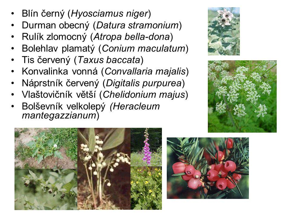 Blín černý (Hyosciamus niger) Durman obecný (Datura stramonium) Rulík zlomocný (Atropa bella-dona) Bolehlav plamatý (Conium maculatum) Tis červený (Taxus baccata) Konvalinka vonná (Convallaria majalis) Náprstník červený (Digitalis purpurea) Vlaštovičník větší (Chelidonium majus) Bolševník velkolepý (Heracleum mantegazzianum)