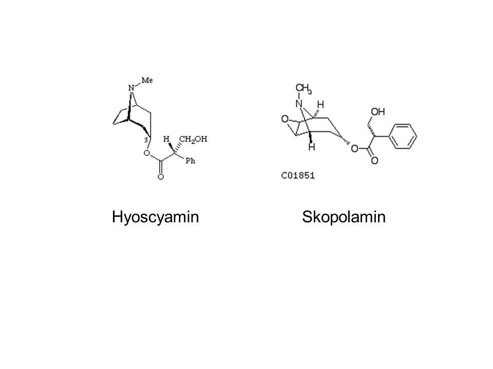 HyoscyaminSkopolamin