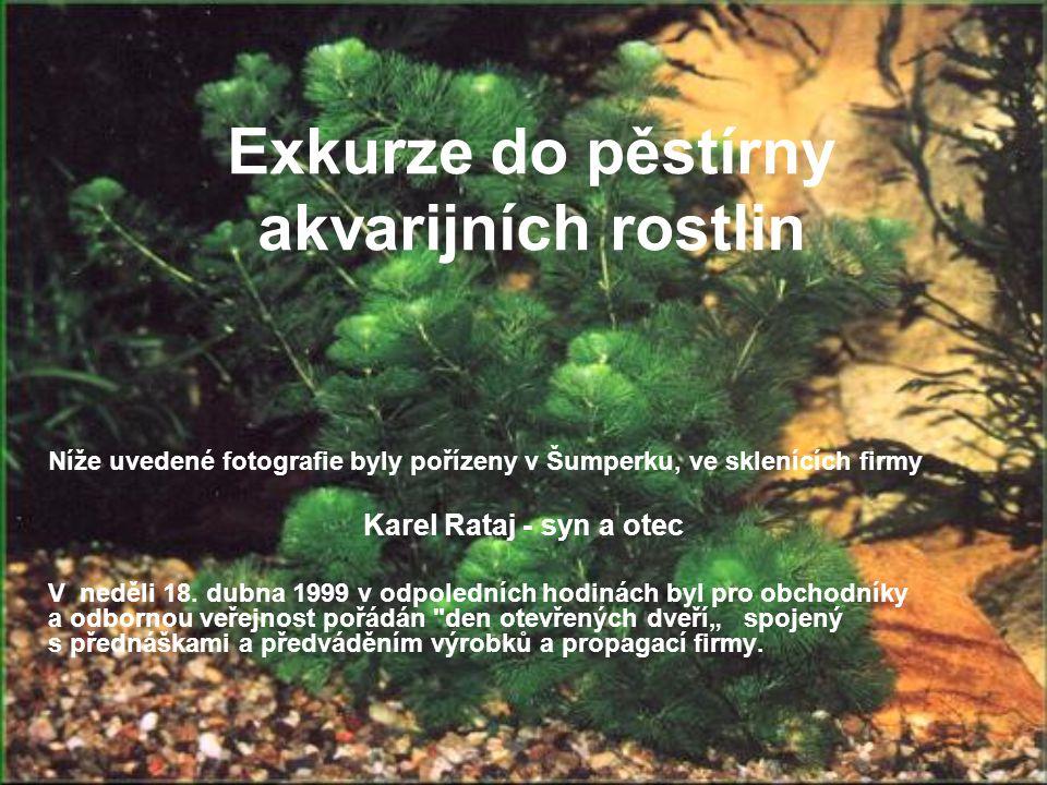 Exkurze do pěstírny akvarijních rostlin Níže uvedené fotografie byly pořízeny v Šumperku, ve sklenících firmy Karel Rataj - syn a otec V neděli 18. du