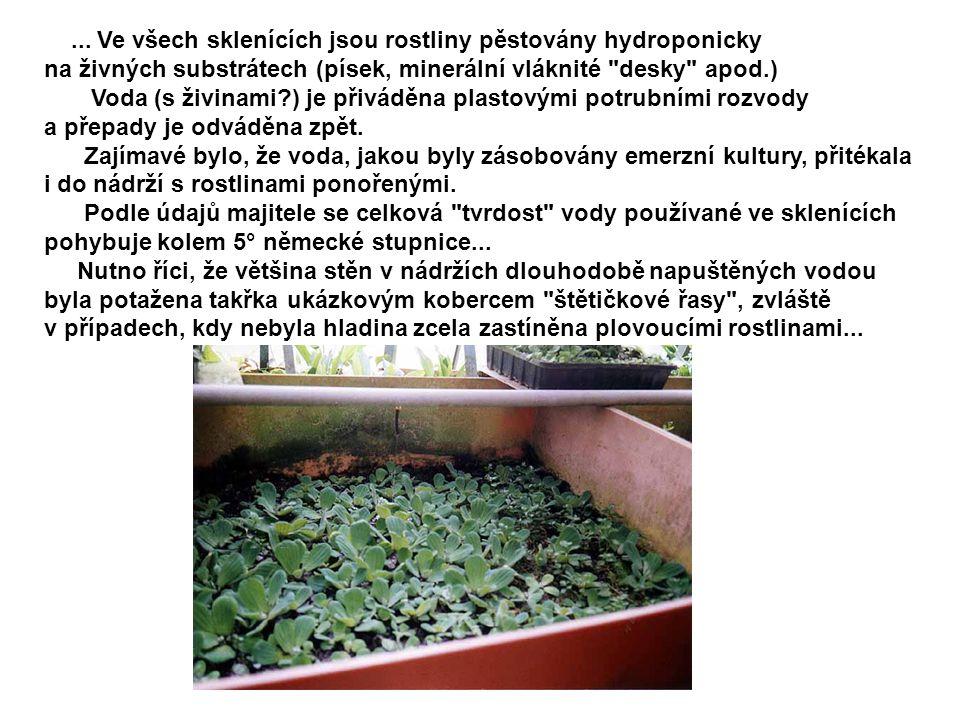 ... Ve všech sklenících jsou rostliny pěstovány hydroponicky na živných substrátech (písek, minerální vláknité