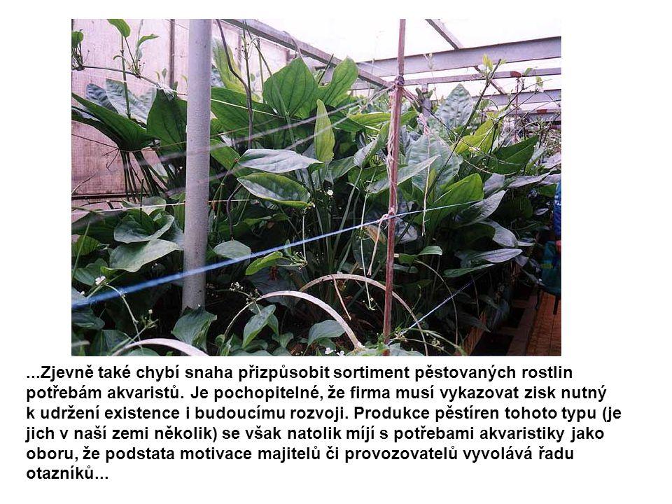 ...Zjevně také chybí snaha přizpůsobit sortiment pěstovaných rostlin potřebám akvaristů. Je pochopitelné, že firma musí vykazovat zisk nutný k udržení
